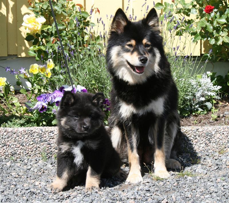Ricki og mor 3