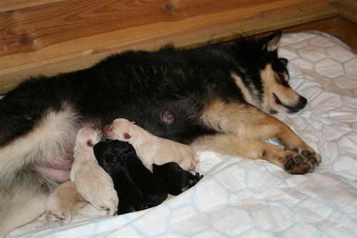 En tikfreds mor med sine 6 små