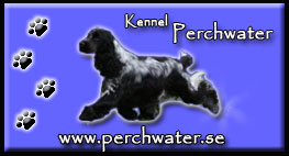 Kennel Perchwater