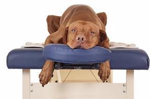 dog-massage-1