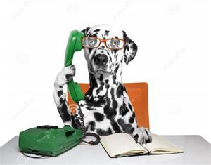 hunden-talar-över-telefonen-69059514 (2)