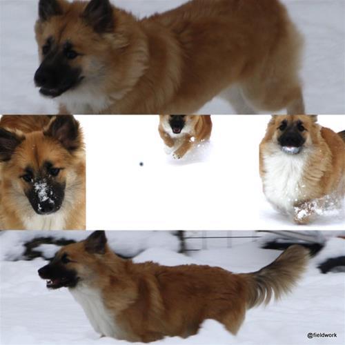 9nov(snöbilder)
