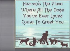 heavens place for dogs