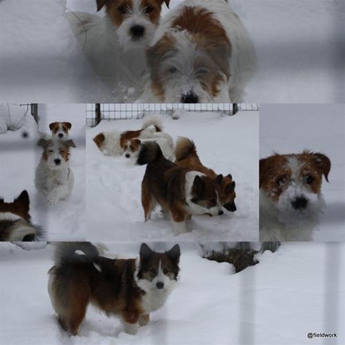 9nov(snöbilder)2