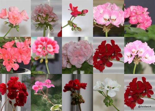20210714 blommor ute o inne