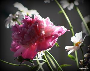 24juni_blom
