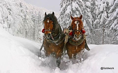 julmotiv hästar