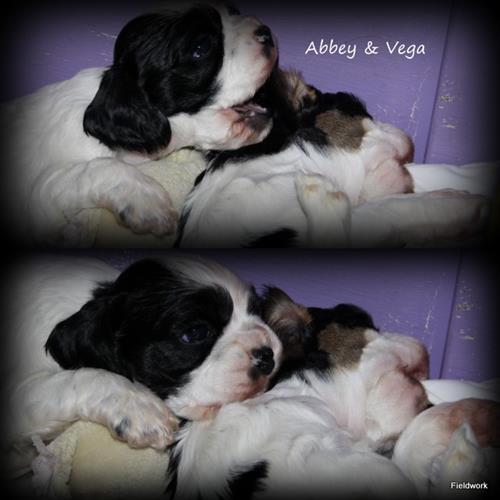 Abbey_Vega 18dec