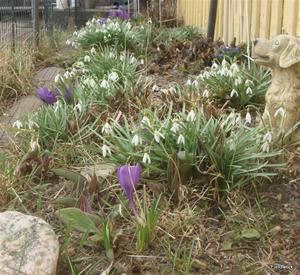 utanför köksfönstren 26 mars 2012