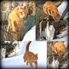 13mars (Tiger_Mojje)