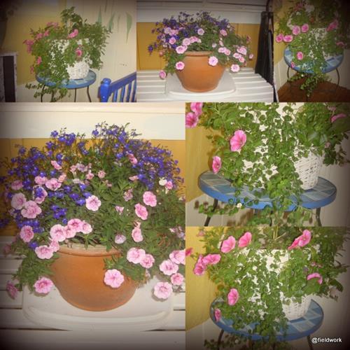 13okt_blom