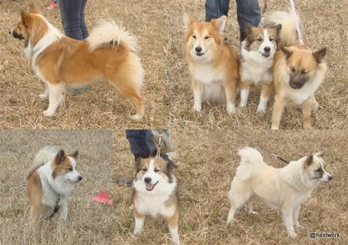 8apr_hundarna som var med
