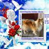 in loving memory - 2zxDa-2uLAs - normal