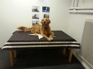 Morris på undersökningsbordet