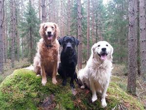 Hundarna i skogen