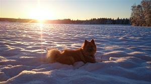 Yatzy i vinterland