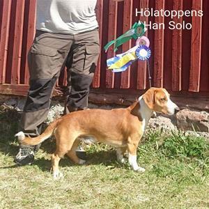 Hölatoppens HanSolo SE28554/2015