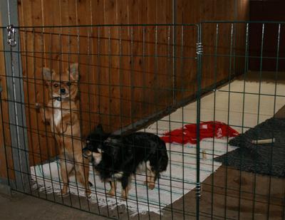 I boxarna får hundarna vara, här mina tjejer Elsa och Bonnie