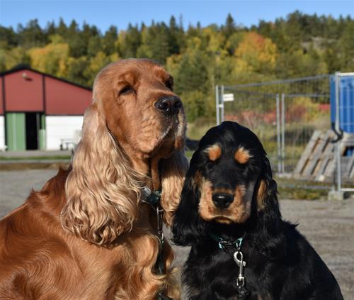 Herman och Malte
