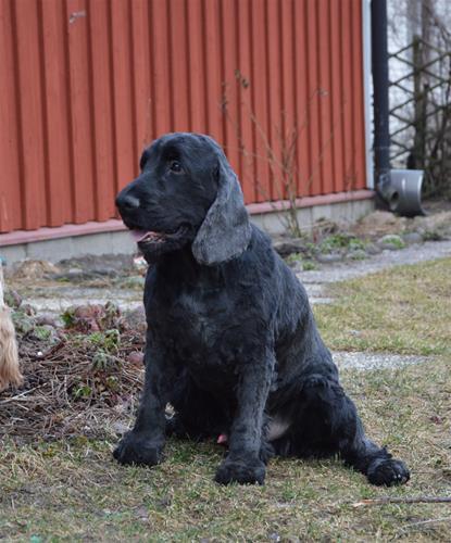 Hjalmar mars-16