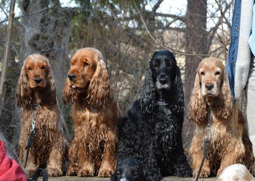 Signe, Herman, Ines och Herta