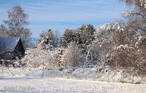 Snö 20210115