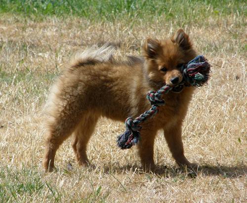 Foxy20mn20080615