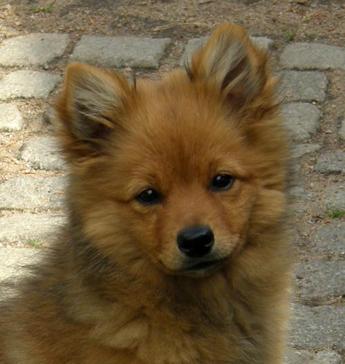 Foxy20huvud20080615