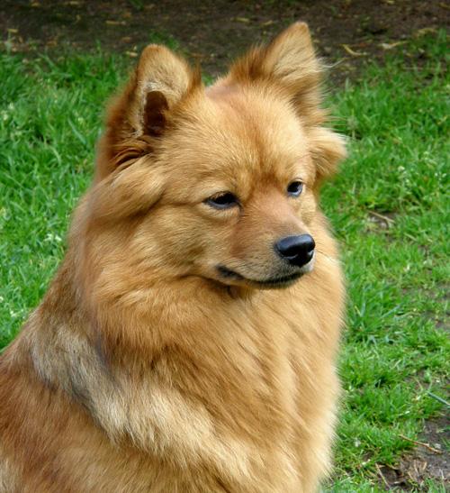 Foxy20090613
