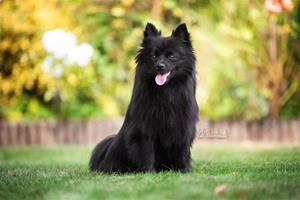 Dagsljus Beautiful Black Aziza - BeeBee, Fotograf: Steffi Wasdenn