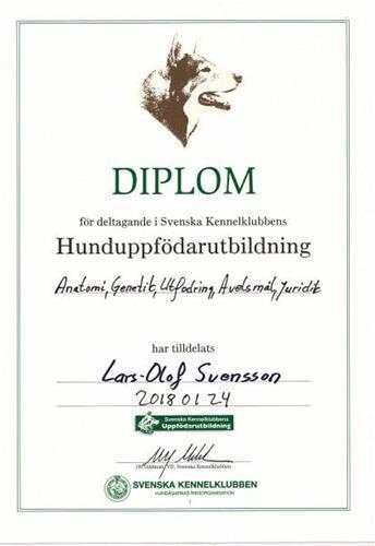Diplom LOS