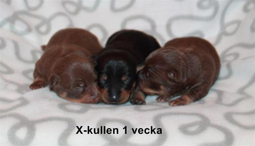 x-kullen1v_text