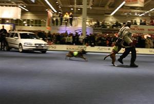 mydog-polis-036
