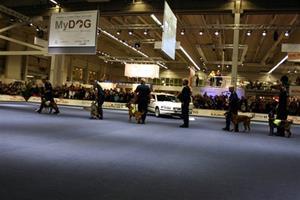 mydog-polis-112