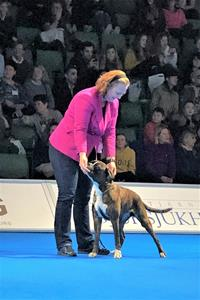 Fika Bir veteran mydog