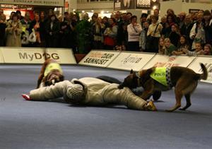 mydog-polis-050