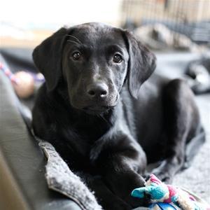 Lilly 11 veckor