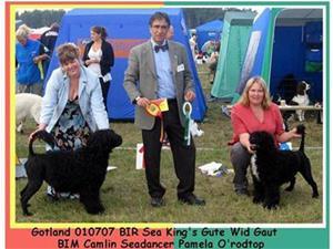 BIR Sea King's Gute Wid Gaut o BIM Camlin Seadancer Pamela O'rodtop - Gotland Dog Show Int 1-7-2007