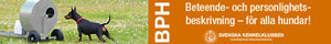 BPH-annons