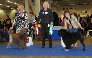 My Dog Gtbg int. 2009-01-06 BIR ABADESSAN´S MONSEUR KENZO & BIM AQUAQTASS ROCHA COM ESPERANCA