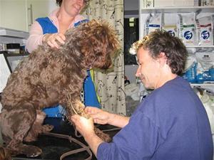 Portis hos veterinären