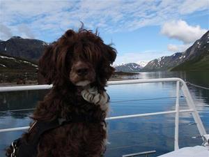 Dimma på båtfärd