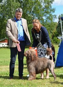 Hanar Öppen klass  Isostar's Hector, Ägare Laila Erlandsen