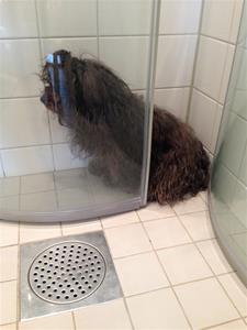 Bild 6Lisen i duschen