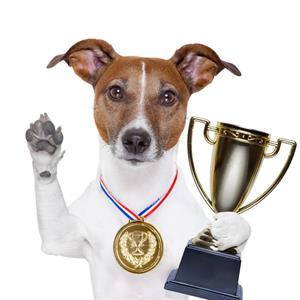 Hund Tävlingsresultat sidan
