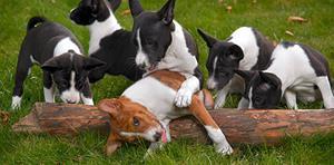 Nya policyn för hundhållning...