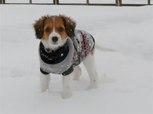 dazzle winter