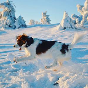 aktiv vinter 2