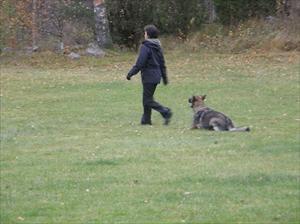 Lägger ner hunden under gång