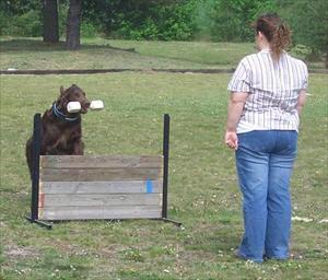 Pernilla apporterar sin hund